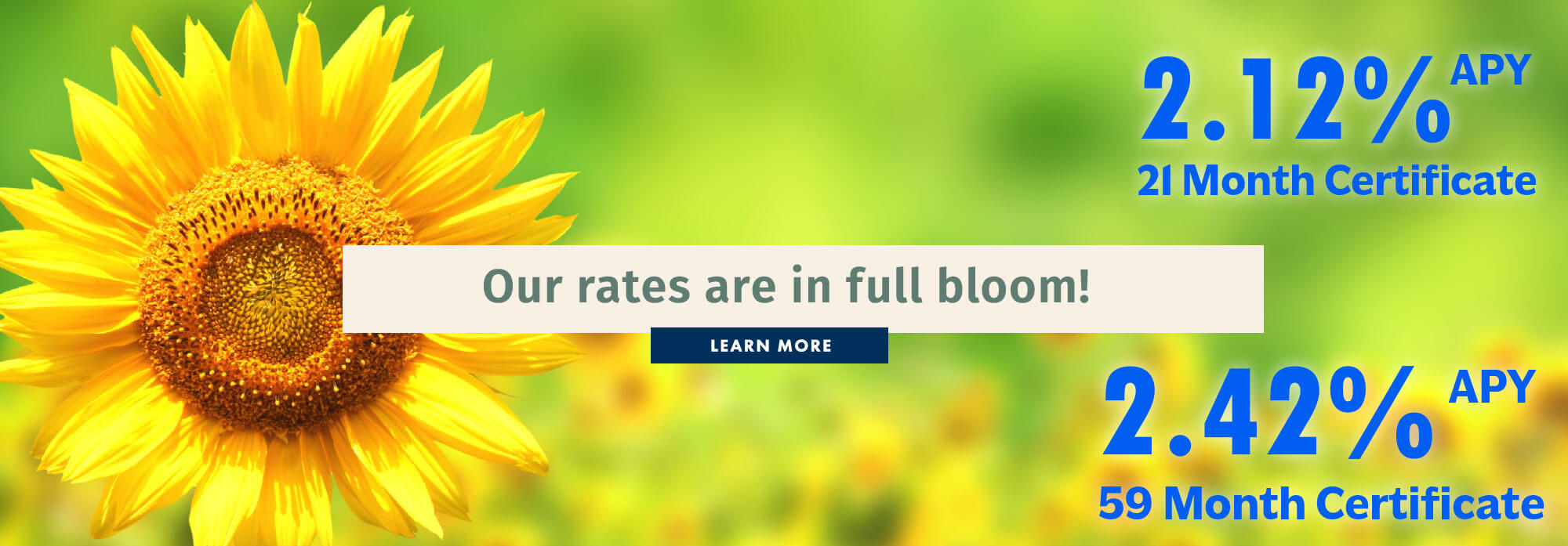 Our Rates Are In Full Bloom!
